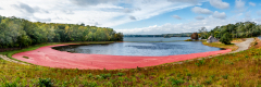 Cranberries-Couit-Rd-7200-Pano-Edit