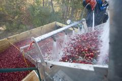 Cranberry-2131