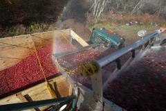 Cranberrys-3218