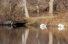 Nye-Pond-1006